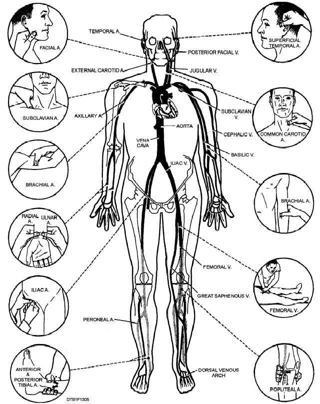 نقاط حساس بدن
